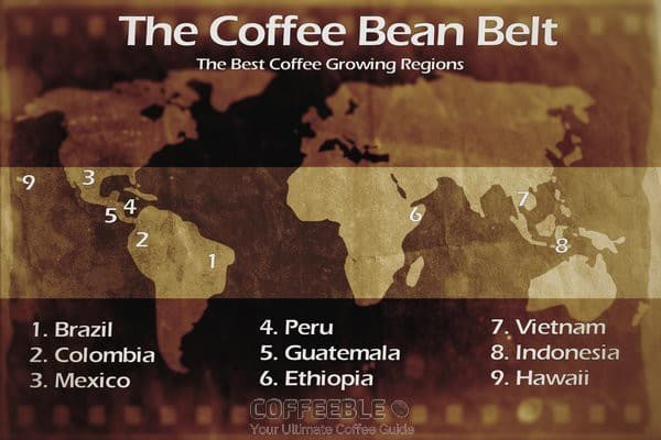 Coffee Bean Belt