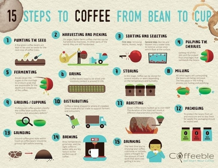 15 steps to coffee from bean to cup infographic