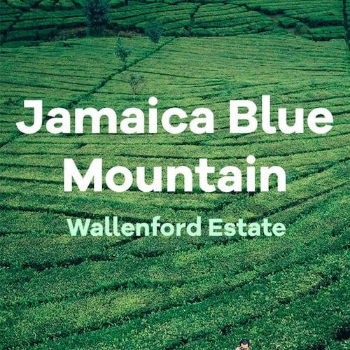 jamaican coffee wallenford estate