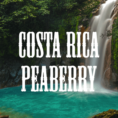 Costa Rica Peaberry Beans