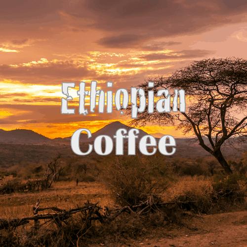 volcanica ethiopian coffee beans