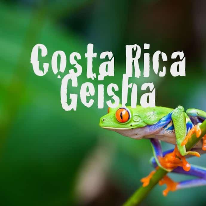 Geisha Coffee Costa Rica - Costa Rican Geisha Coffee