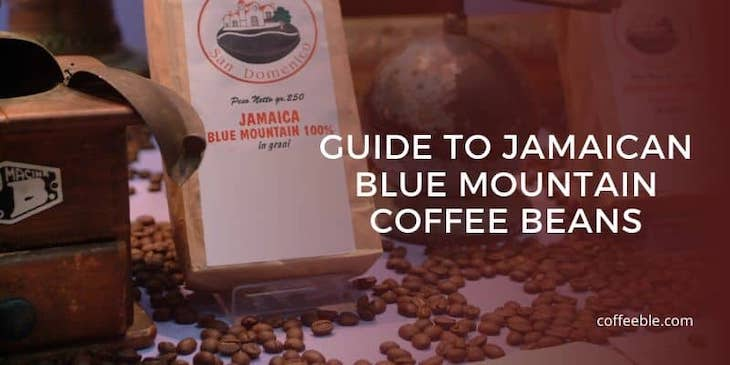 guide to buying jamaican blue mountain coffee beans