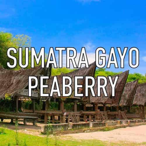 Sumatra Gayo Peaberry