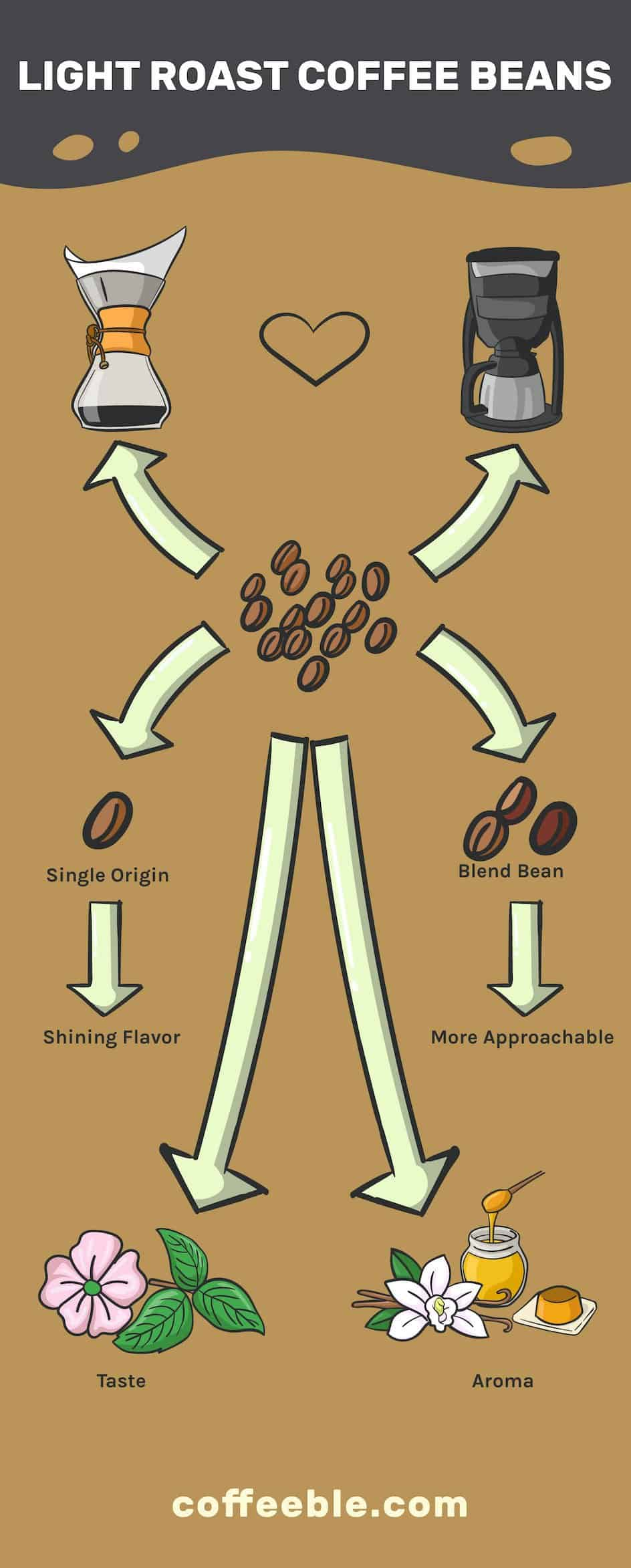 Infographic explaining what light roast beans best go with and what flavors do they have