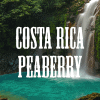 Costa-Rica-Peaberry