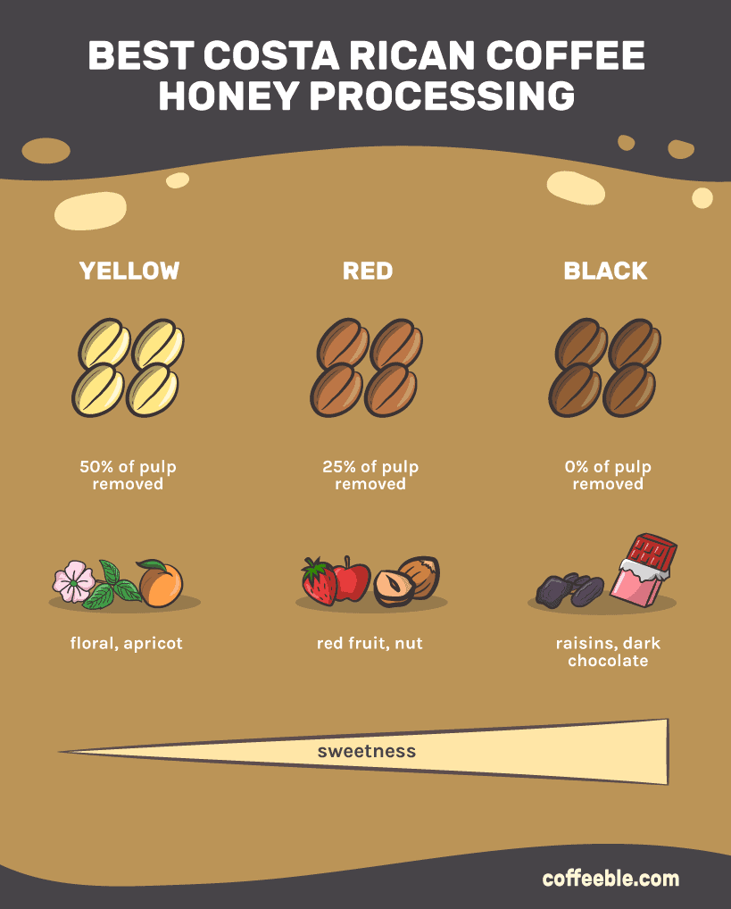 Costa Rican Coffee - Honey processing infographic
