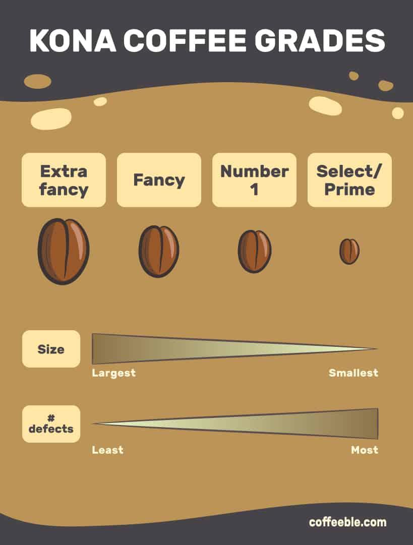 KONA COFFEE GRADES infographic