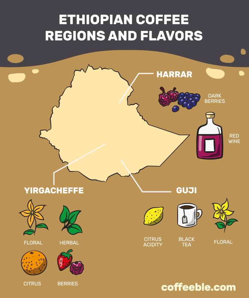 CI_Ethiopian Coffee Bean Guide