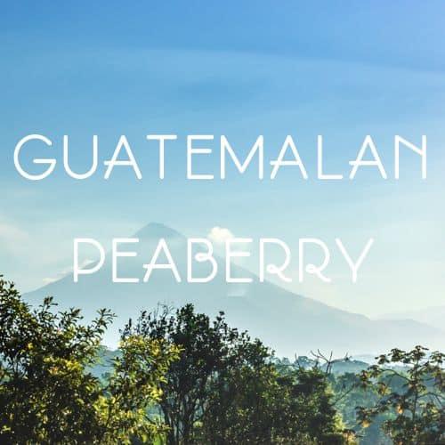Guatemalan_Peaberry